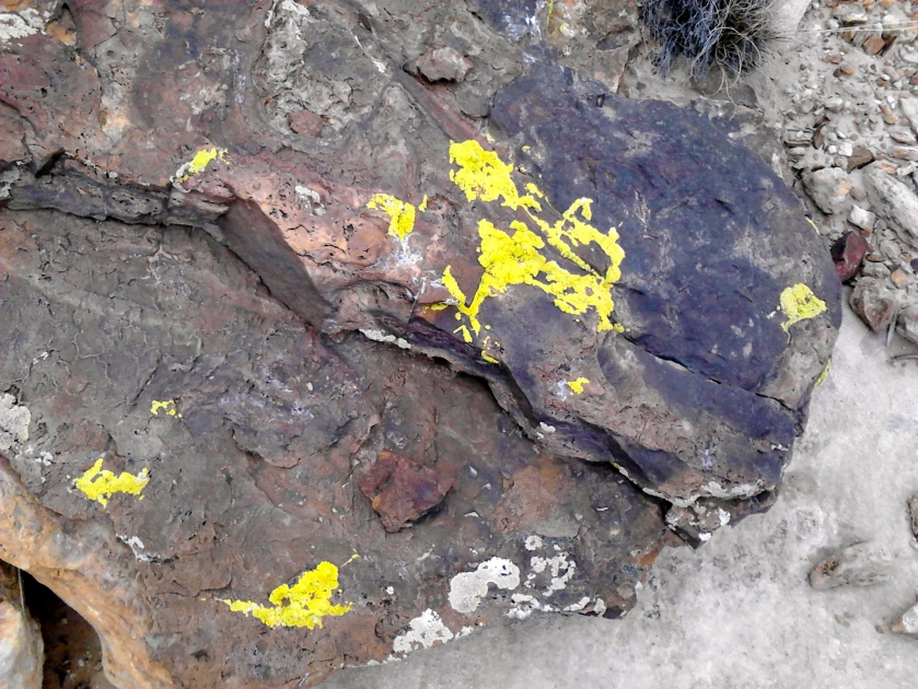 Yellow lichen growing on rocks.