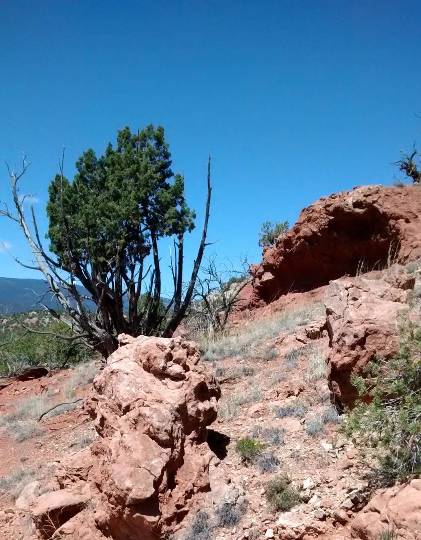 New Mexico blue skies!
