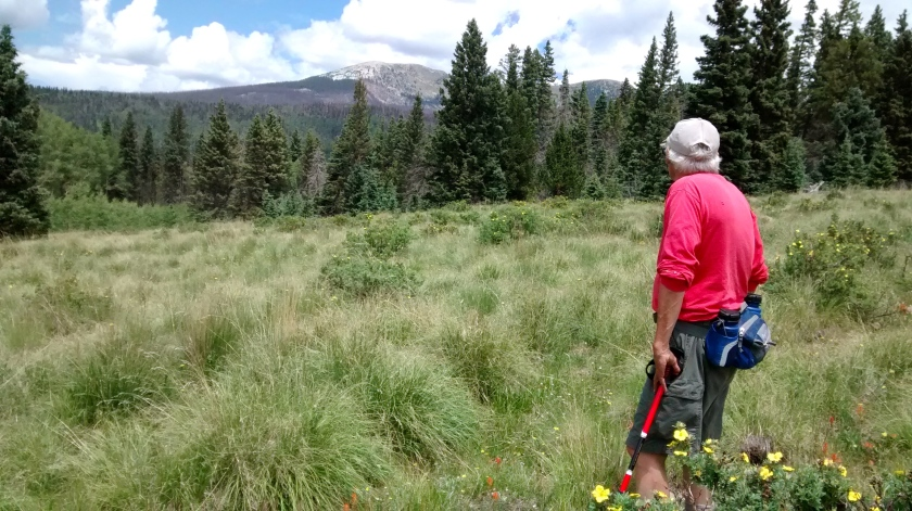 Hike turnaround point in meadow with view of Pecos Baldy.