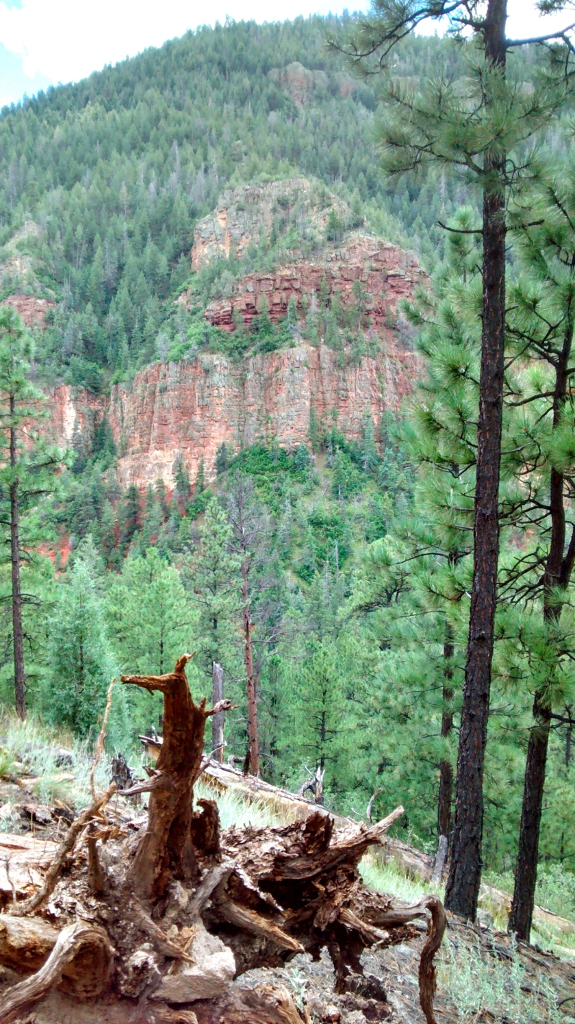 On the trail from Jemez Falls to the springs.