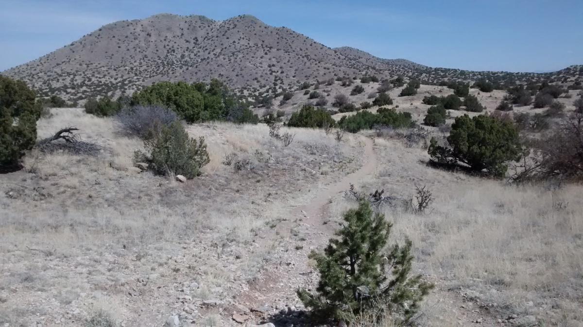 Cerrillos Hills BrambleRamble