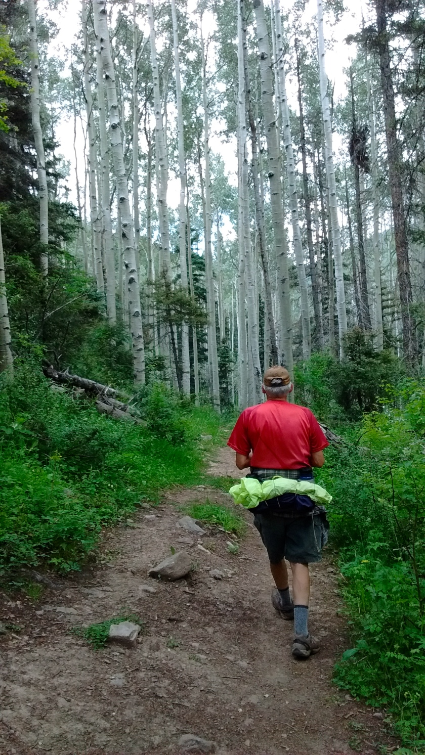 Walking through stand of aspen.