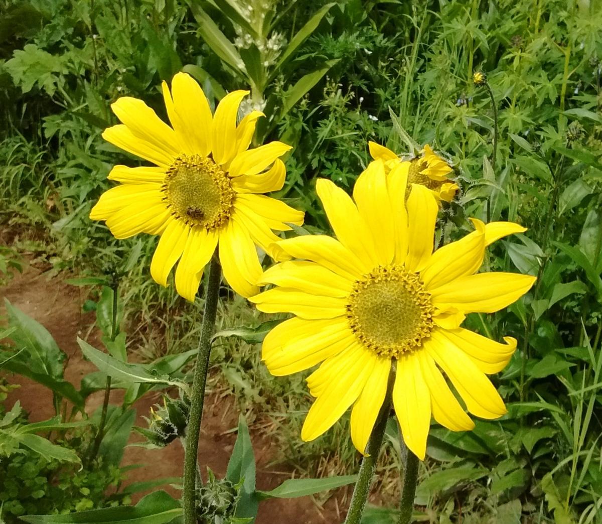 Wildflower Weekend