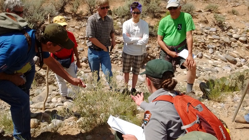 Learning about a plant (can't remember the name!) in an arroyo at Aztec Ruins.