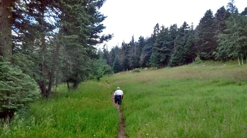 Starting loop onto Ellis Trail.