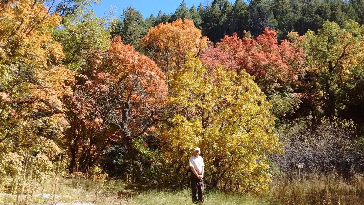 Fall Colors in theManzanos
