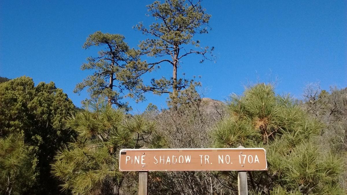 Pine Shadow Trail