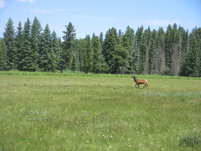 We saw an elk running across one of the meadows.
