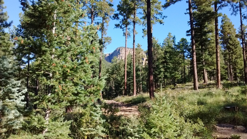 First mile or so of the trail is through pine forests--our goal is in the distance.