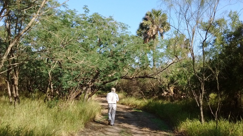 Walking trails in Sabal Palm Sanctuary.