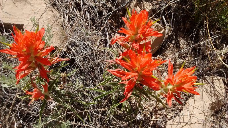 Quebradas Byway Blooms