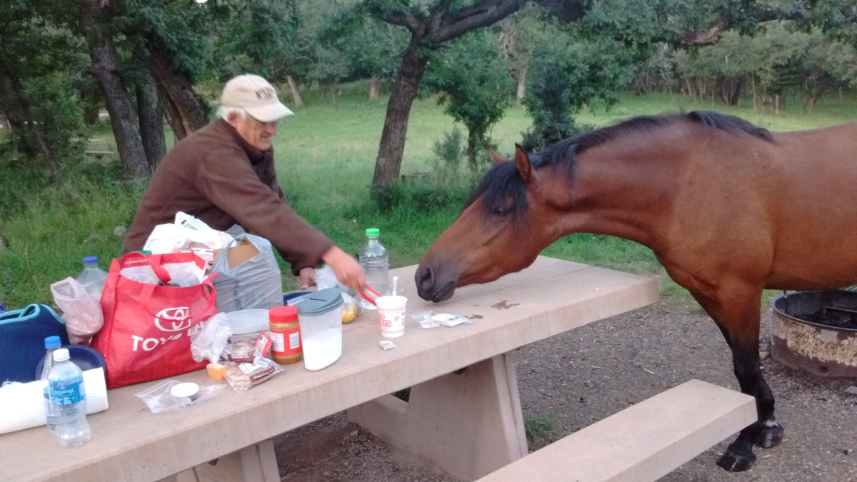 Wild Horses Couldn't Drag UsAway